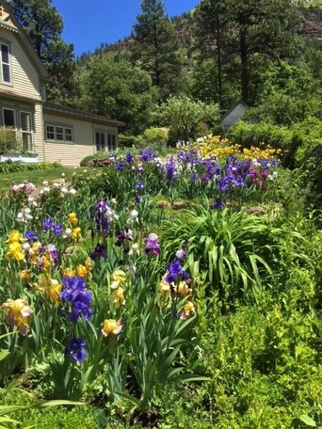 Vierling Garden 2